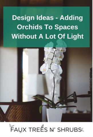 Design Ideas: Adding Orchids To Spaces Without A Lot Of Light