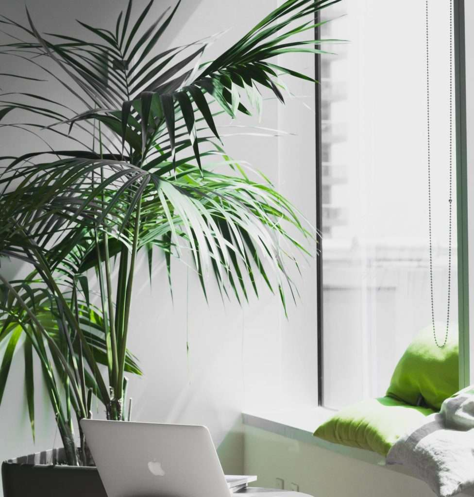 If your plant faces the sun, be sure to rotate it in order to minimize the effects of UV rays